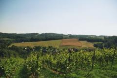 2.-Winnica-Notabene