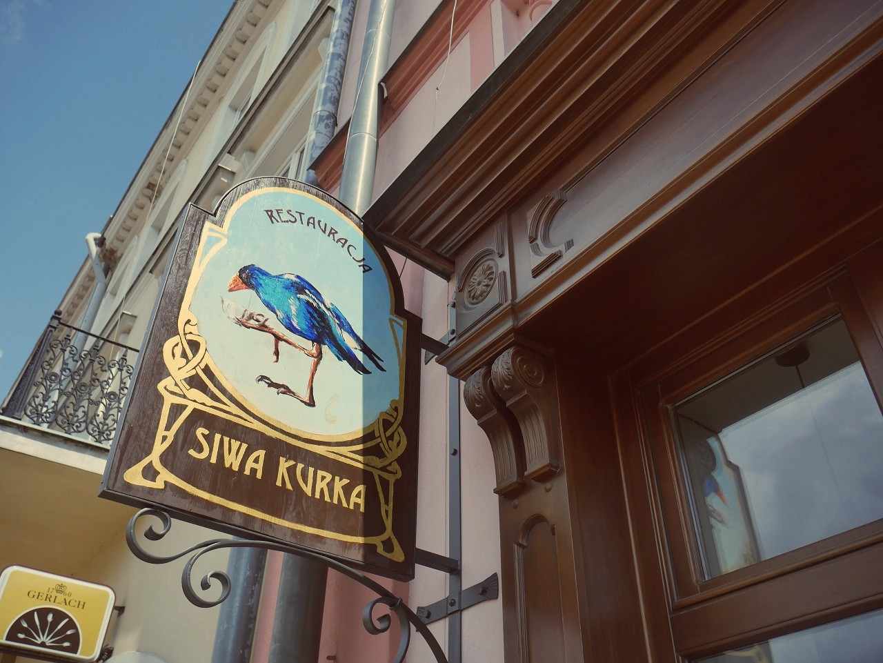Siwa Kurka w Jarosławiu